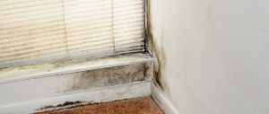 Managing Fungus in Humid Conditions – A Texas Homeowner's Guide to Mold and Fungal Infections